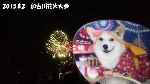 加古川花火大会1