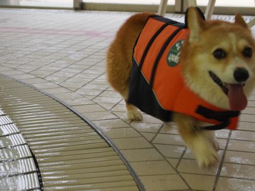プールサイド専門~