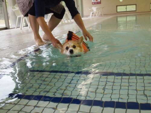 プールで必死