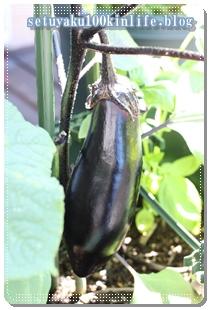 大きく育てたナスも収穫!時短・簡単さっぱり料理は?節約ベランダプランター家庭菜園
