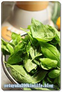 大量収穫!家庭菜園プランターのバジルでバジルソースを作ってみた。~節約ベランダガーデニング7