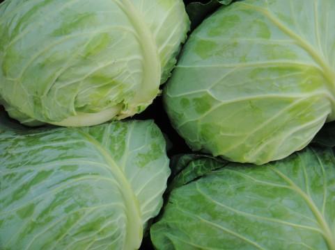 野菜冷凍で節約【11】キャベツ