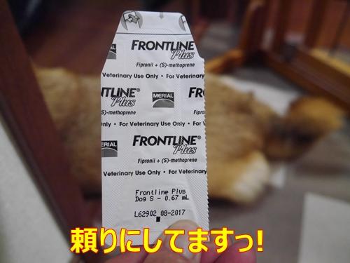 1フロントライン