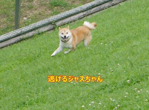 2走るジャスちゃん