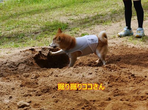 5掘るココさん