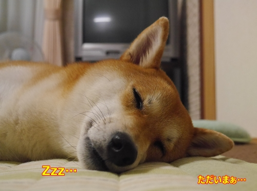 3寝ている