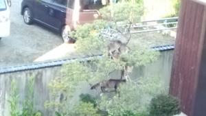 木登りネコ