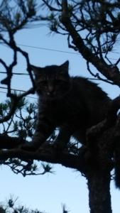 逃げ遅れネコ