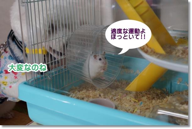 シンちゃん チャコちゃん5
