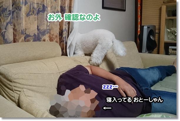 おとーしゃんの災難1