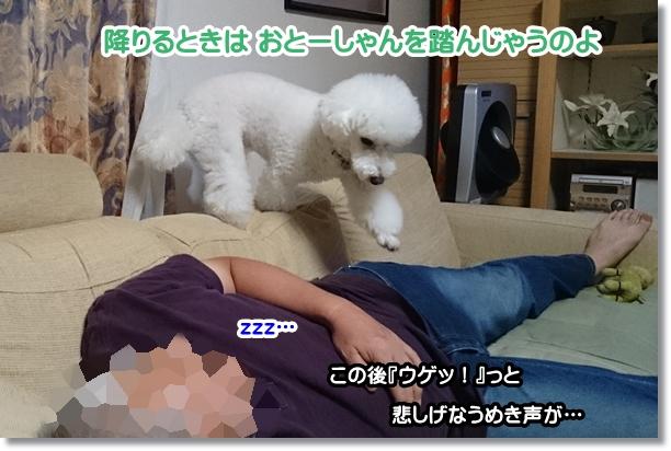 おとーしゃんの災難2