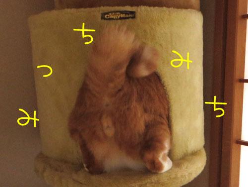 しゅたっ=3