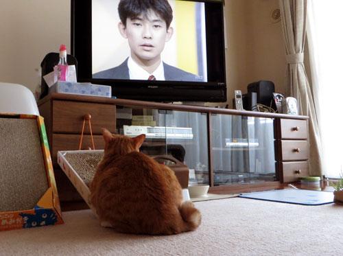 テレビっこ