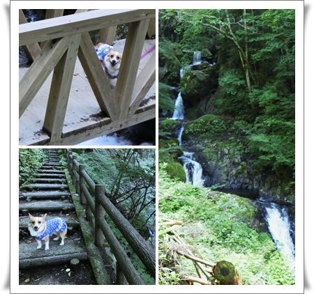 白猪の滝1