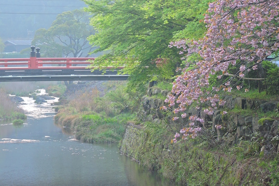 一の俣温泉グランドホテル前の八重桜