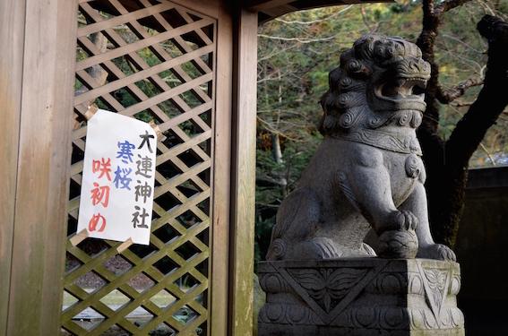 大連神社の寒桜