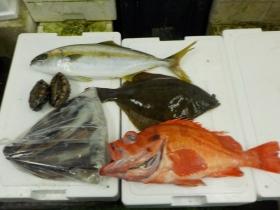 9鮮魚セット2015731