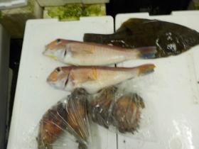 12鮮魚セット2015731
