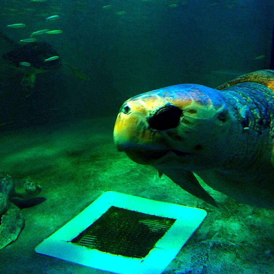 マリンピア松島水族館 カメ