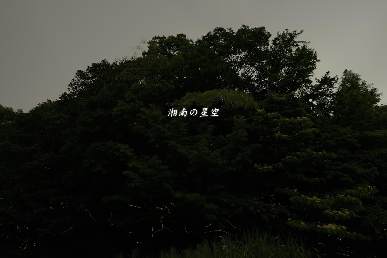 20150611_ホタル2