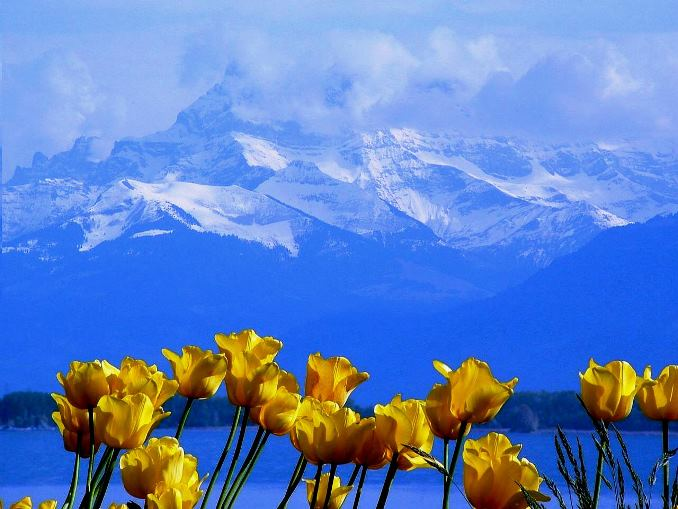 ++++Mont Blanc