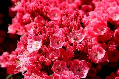 赤い花Img_0441downsize