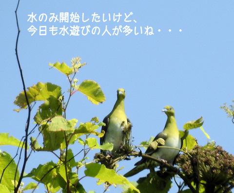 2015720aobato2.jpg