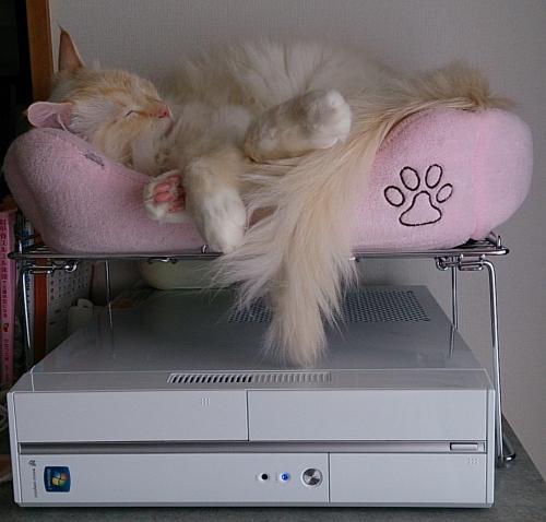 パソコンの上_白玉猫