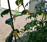 植物 (3)