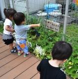 野菜倶楽部 (1)