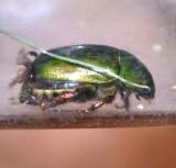 昆虫 (4)