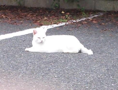⑦三崎公園猫1