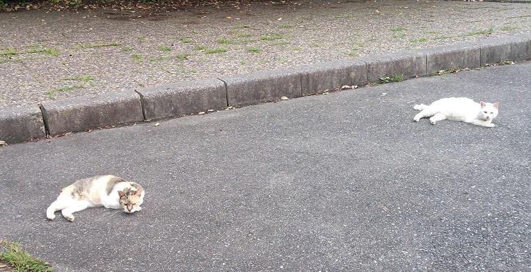 ⑨三崎公園猫3