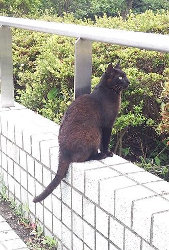 ⑩三崎公園猫4