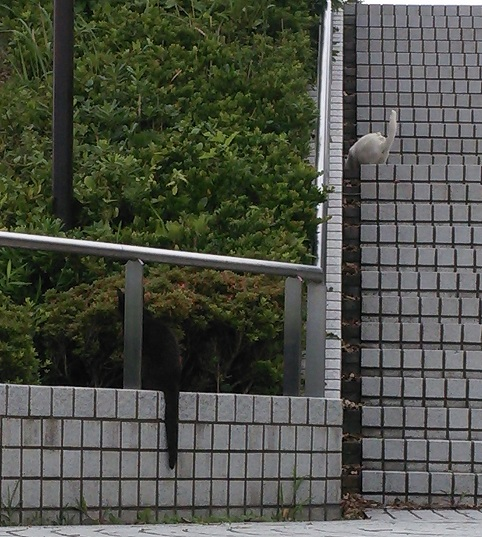 ⑪三崎公園猫5