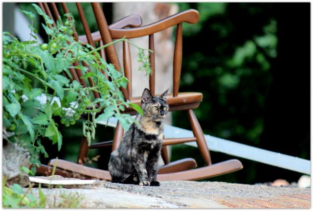 ネコ ねこ 猫