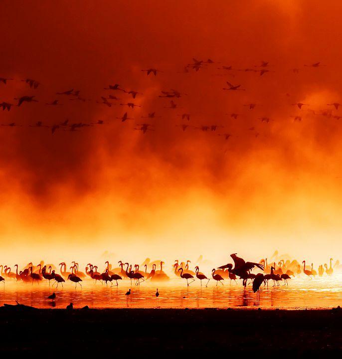 ケニア-写真-23
