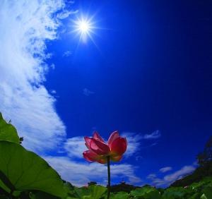 sorakotodama369風と癒しの道しるべこのはなさくや月璋院  千ことCHeKOです!