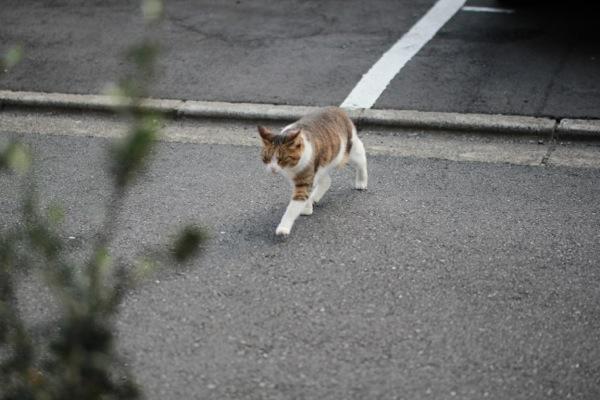 akijisida4.jpg
