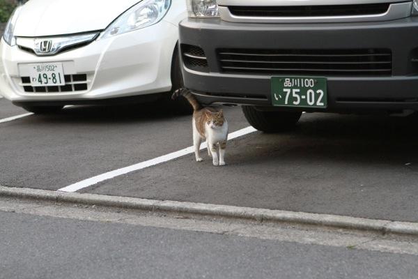 yukiji1.jpg