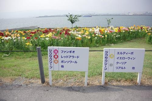0020舞洲ゆり園