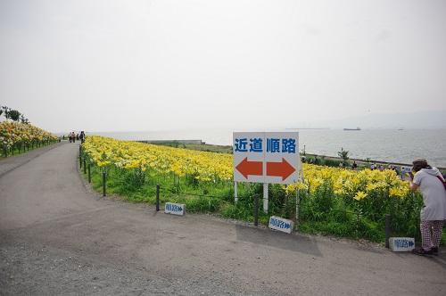 0031舞洲ゆり園