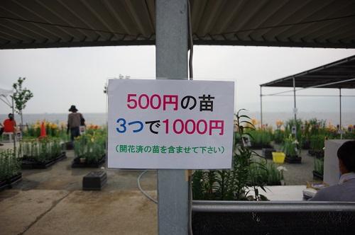 0061ゆり苗販売