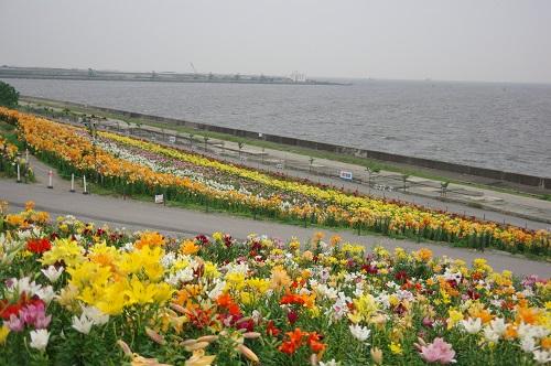 0088大阪舞洲ゆり園
