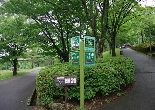 0003舞鶴自然文化園紫陽花園