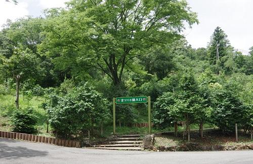 0080舞鶴自然文化つばき園