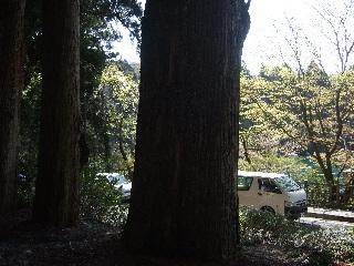 杉の巨木_H22.05.01撮影