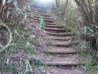 自然木の階段_H22.05.01撮影