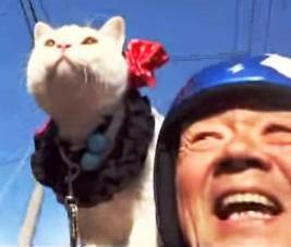 肩乗り猫 01