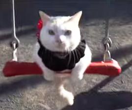 肩乗り猫 02